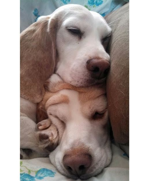 These Pets Just Need 5 More Minutes Of Beauty Sleep