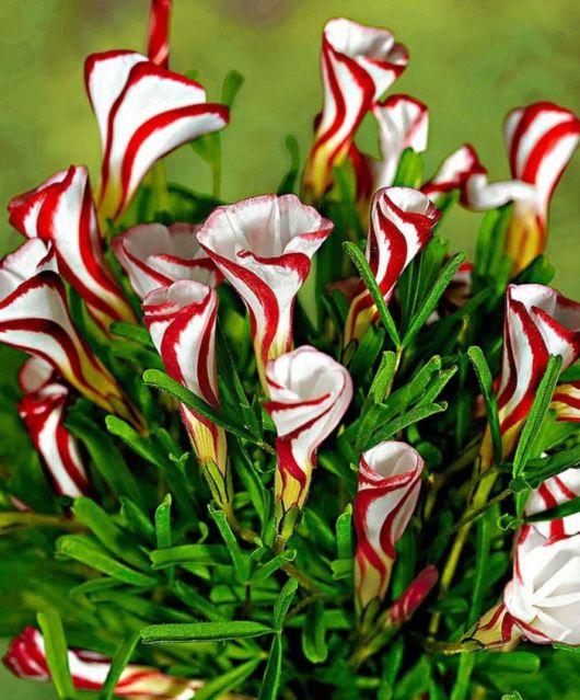 Some Unusual Beautiful Flowers