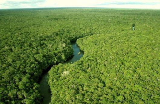 The Beautiful Amazon Rain Forest