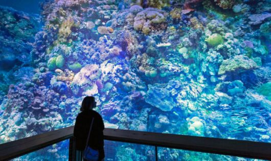 Spectacular View Of Germany's Full Scale Barrier Reef Panorama
