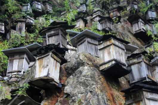Wooden Hives For Bees
