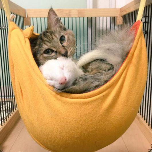 Unususal Friendship Of Rescued Kitten And Five Ferrets