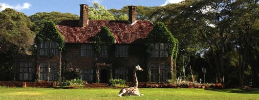 Living With Giraffes At Nairobi's Giraffe Manor