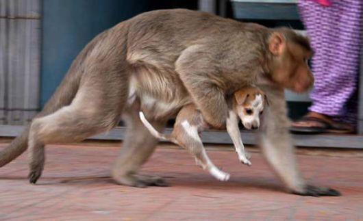 A Monkey Adopts A Cute Puppy
