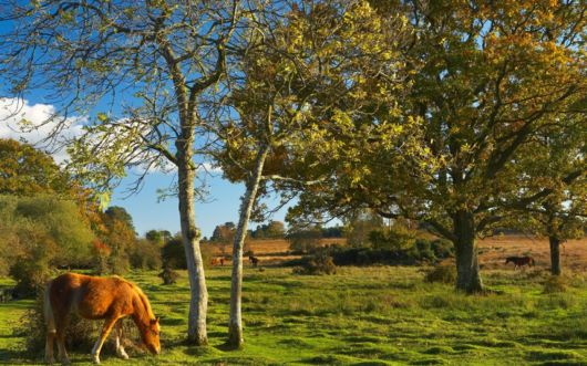 Top Places To Live For Wildlife Lovers